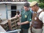 IBAMA, MINISTÉRIO PÚBLICO E POLÍCIA MILITAR PRENDEM TRAFICANTES DE AVES SILVESTRES