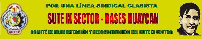 Sute IX sector