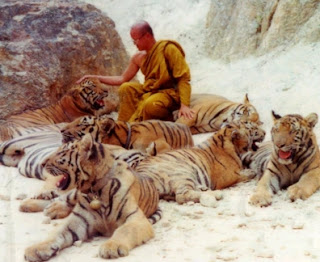 Wat Luang Ta Bua - The Tiger Temple in Thailand