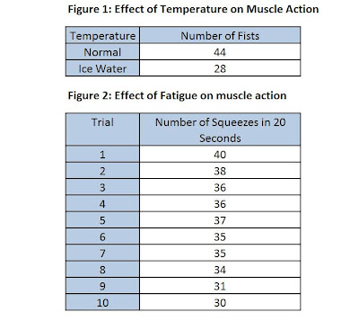human muscle function and fatigue – tikuzan, Muscles