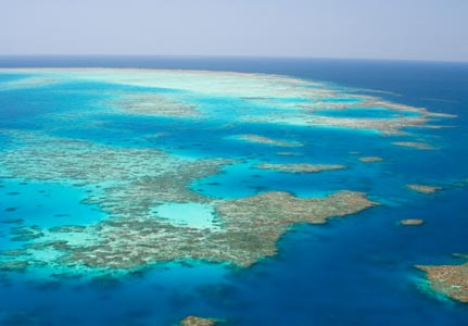 Great Barrier Reef...rare fish species discovered beneath sea!