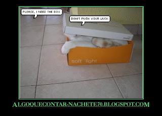 gato-en-caja