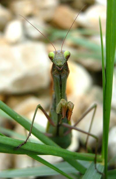 [mantis.jpg]