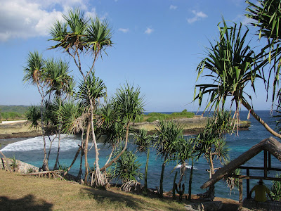 Pandanus trees as a stunning component of tropical landscaping