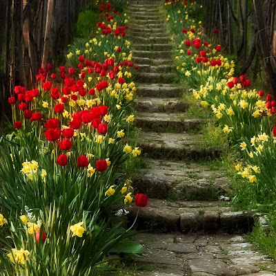 Stone stairs between tulip beds