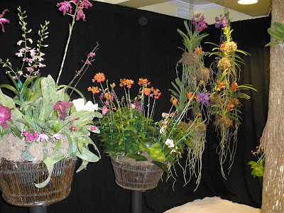 (Ex-Cayman Weddings) 2009 Orchid Show - image 5