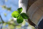 このページへのご意見などありましたらこちらへお願いします mail to leafforest