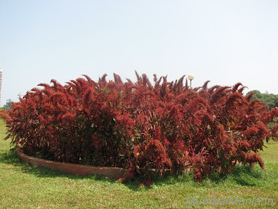 thick red bush