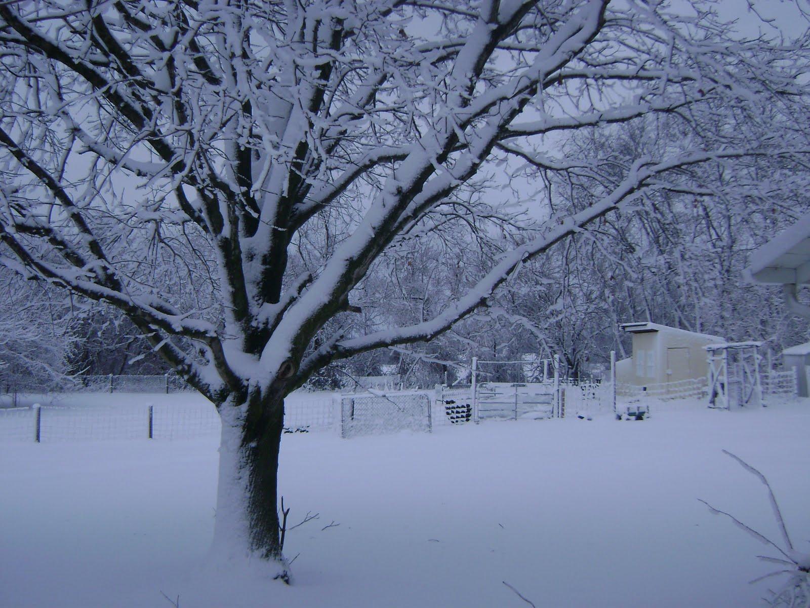 Katiegirl: January 2011