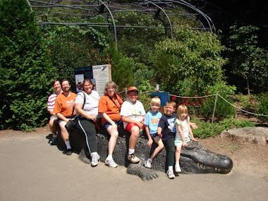 Alligator Seat...