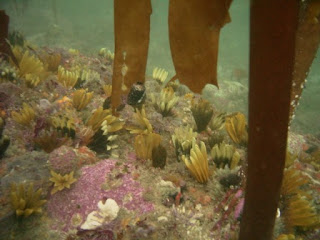 The Low Down on Cape Town Diving
