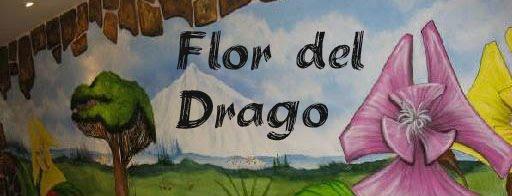 Flor Del Drago