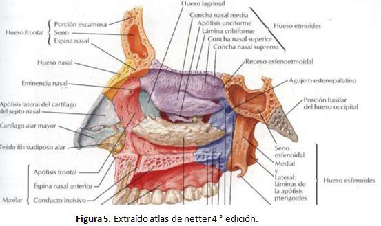 Cardiorespiratoriouq cavidad nasal por diana for Pared lateral de la cavidad nasal