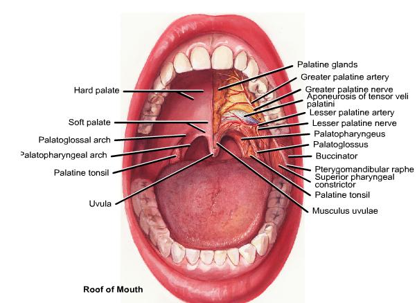 antiinflamatoare nesteroidiene indicatii terapeutice