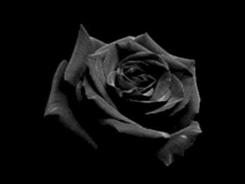 wallpaper rose black. Black Rose : The