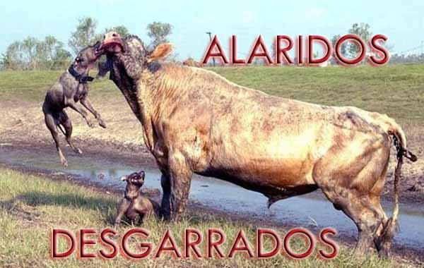 ALARIDOS DESGARRADOS