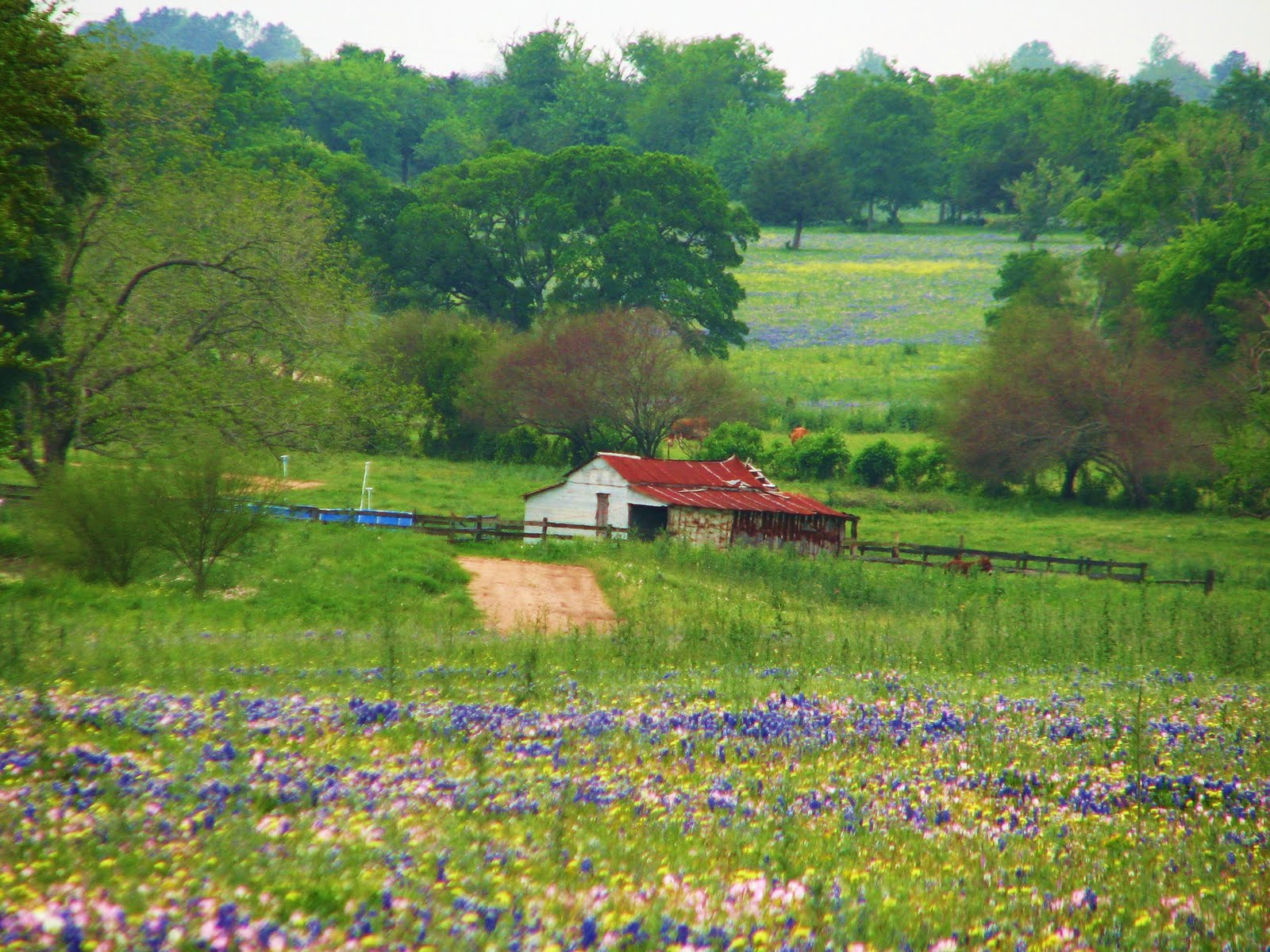 In Whispers and Shouts: Fields of Wildflowers