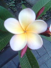 Frangipani...one of my favourites