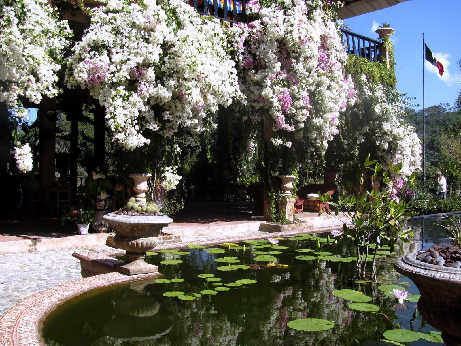 The nautilus template aventuras de la tierra por mexico - Puerto vallarta botanical gardens ...