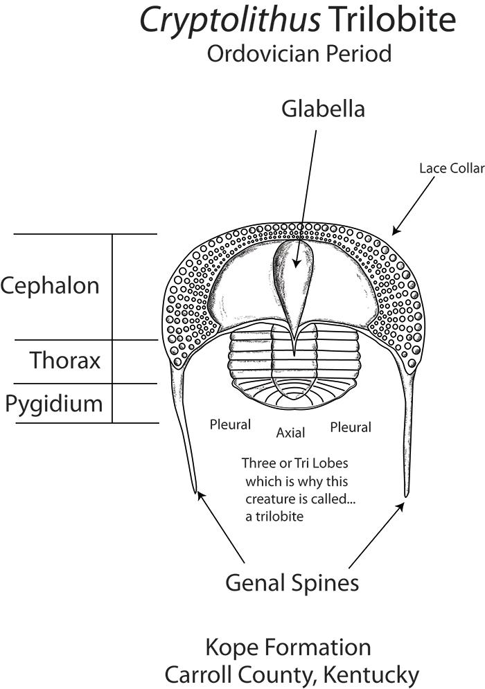 Hollyrux Digestive System Diagram Quiz
