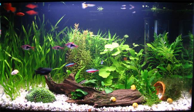 Acuarios spetyone acuario comunitario for Acuario comunitario