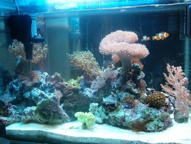 Acuarios spetyone acuario marino - Decoracion acuario marino ...