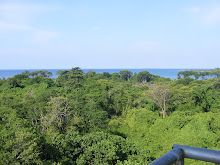 Pemandangan pulau burung
