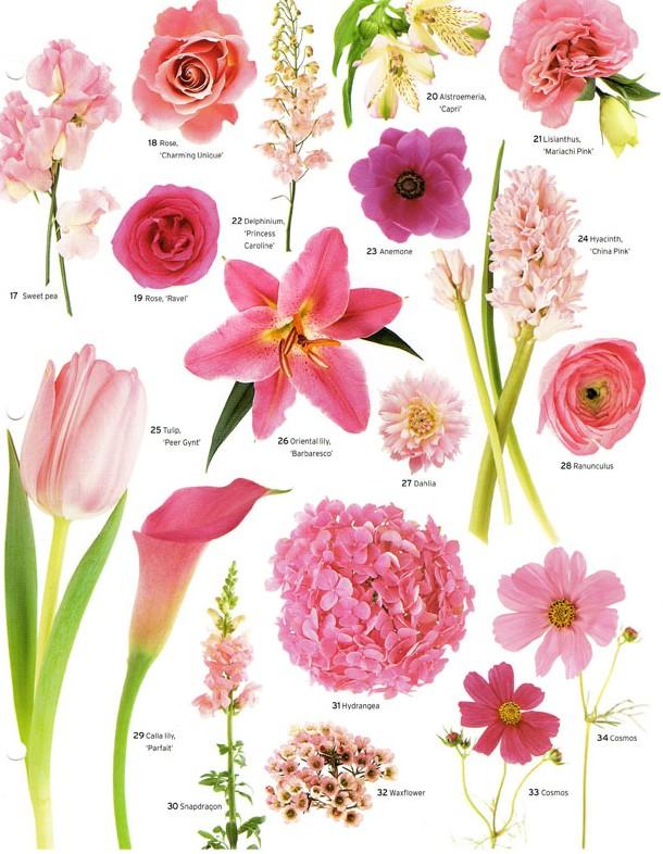 Matrimonial Meg: Flower Power