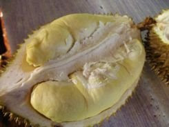 durian parung bogor