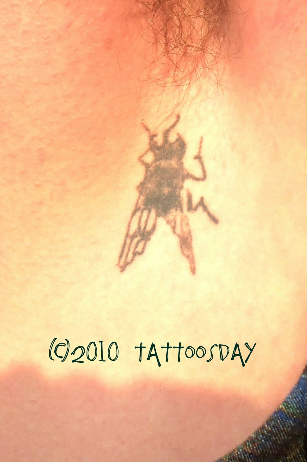 House Fly Tattoo