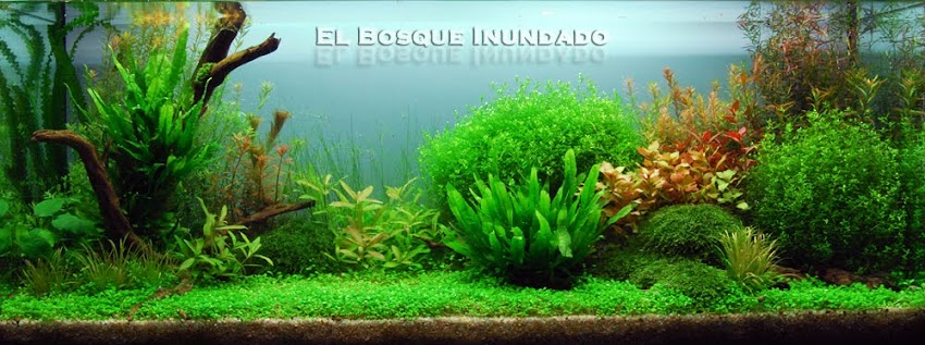 El Bosque Inundado