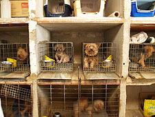 Perros de raza:no compres!NO PARTICIPES EN ESTO: ASI VIVEN MUCHOS DE LOS ANIMALES EN LOS CRIADEROS