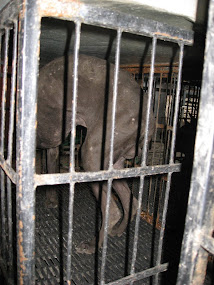 Prisoner 58