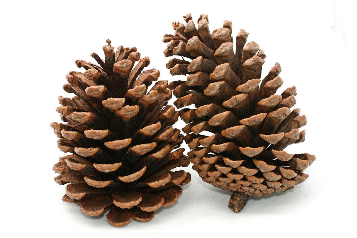 Krinja kreativnosti pinecone christmas for What to do with pine cones for christmas