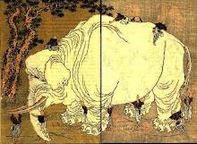 .gajah.