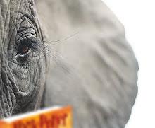 .elephant eyes.