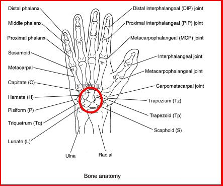 Chapter 1 Basics besides 5605683 as well How To Take History Of Hand Wrist Joint moreover Fractures Of The Calcaneus  heel Bone Fractures together with Constructing A Character Using Simple Shapes. on types of joints diagram
