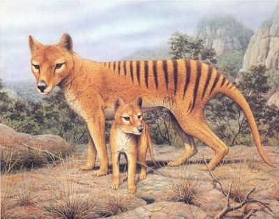 Tigre de Tazmania