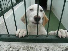 Manchita, en la perrera de Mérida. ¿Me adoptas?