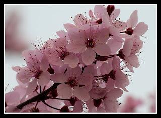 primavera gallega