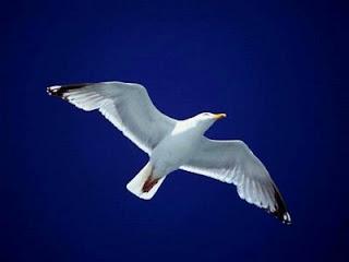 http://4.bp.blogspot.com/_Zam_kxun9Mg/ScejWCfu5xI/AAAAAAAAAFk/mAgzmj0RXQQ/s400/albatroz.jpg