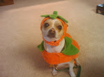 Happy Halloween from Toby