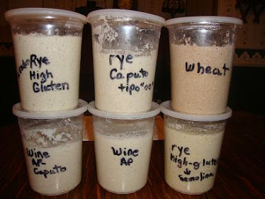 """wild yeast starters"", Toby helped me with"