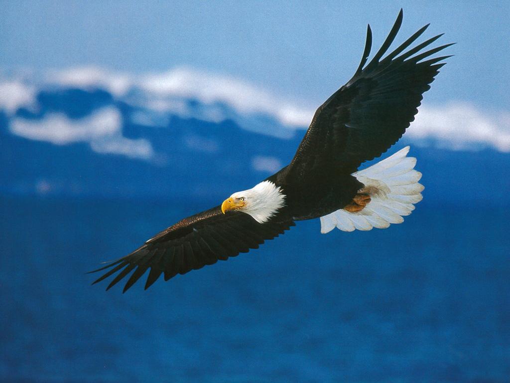 http://4.bp.blogspot.com/_Ze2e-t3CN_A/TMVpz-WVkMI/AAAAAAAAKGA/sQg2eQDHJzM/s1600/American_Bald_Eagle_in_Flight.jpg