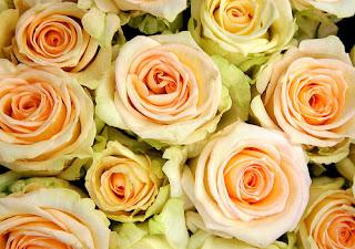 جميلة الورود 11788007_51135fc8bd.jpg