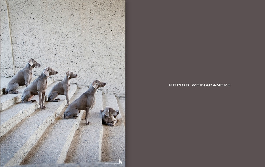 Koping Weimaraners