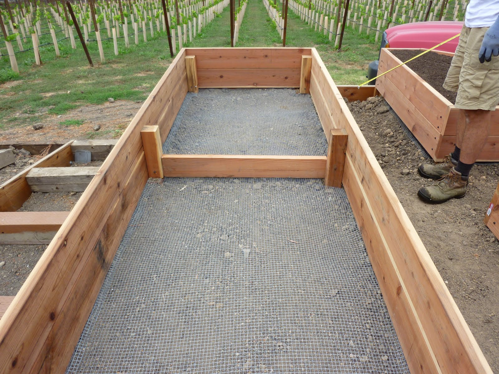 vegetable garden how to build a raised bed vegetable garden box