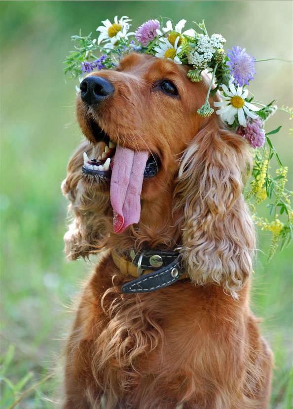 [dognflowers.htm]