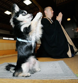 News alert: Buddhist dog prays