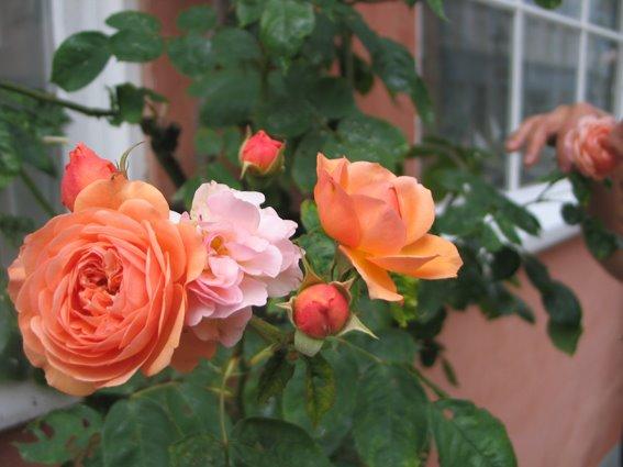 [Sommerhus+med+Kristine,+18.+juni+2008+005,+blog]